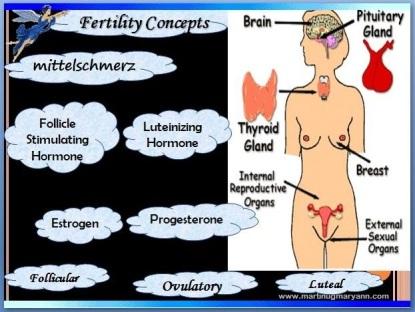 female repro system