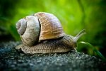 suso (snail) by livescience com